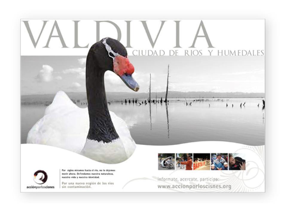 afiche-cisne