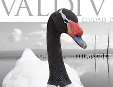 afiche-cisnes